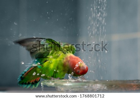 The green-red parrot bathes in the water, the fountain in the house Photo stock ©