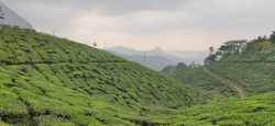 The green tea hills on many mountain with subset at Kerala