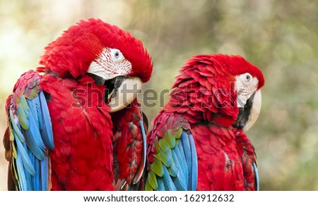 Shutterstock The green-winged macaw known also as the red-and-green macaw