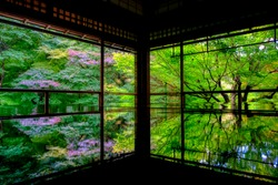 the greens with reflected on the table in kyoto