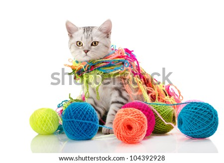 the grey  beautiful little  kitten with  many multi-coloured clew,  on white  background , isolated