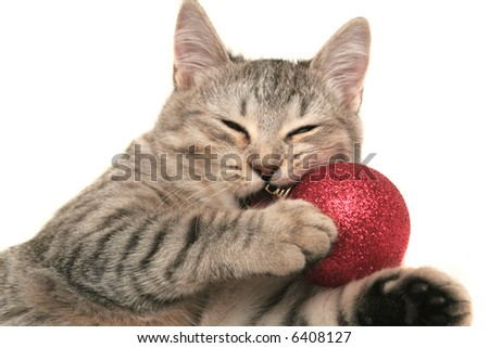 The grey cat plays with a red New Year's toy