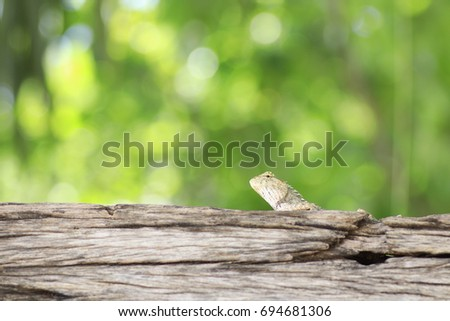 the grey chameleon on trunk and white and yellow bokeh on green background  #694681306