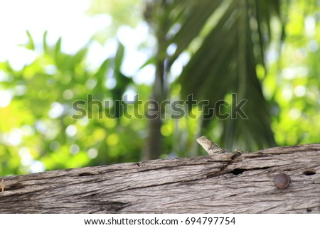 the grey chameleon on trunk and white and yellow bokeh on green background #694797754