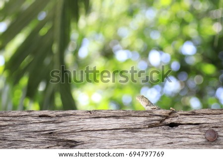 the grey chameleon on trunk and white and yellow bokeh on green background #694797769