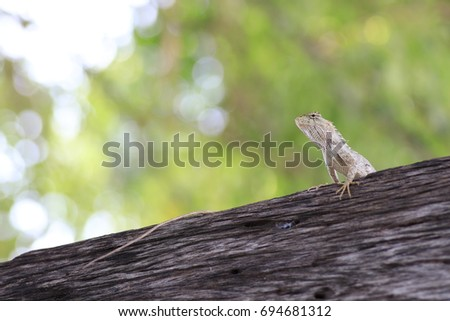 the grey chameleon on trunk and white bokeh on yellow and green background  #694681312
