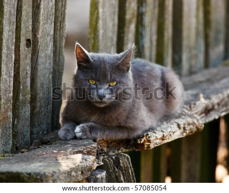 The grey malicious cat sits on a bench.