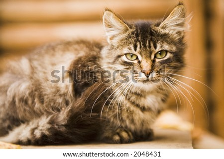The grey rural cat sits on a board
