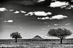 The greyscale shot of the trees in the savanna plains during sunset - perfect for background