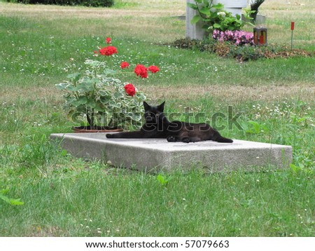 The grieving cat on a grave stone