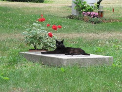 The grieving cat on a grave stone. Stöckener Friedhof, Hanover - Germany
