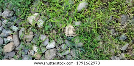 The ground is covered with stones and green grass.
