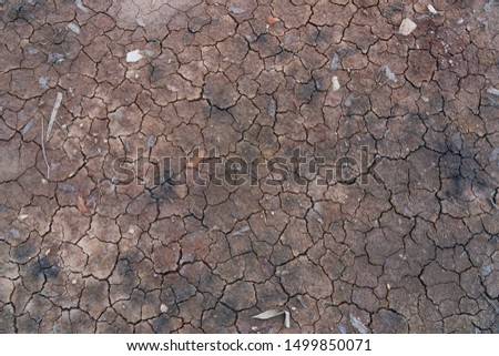 The ground is dry during the dry season.