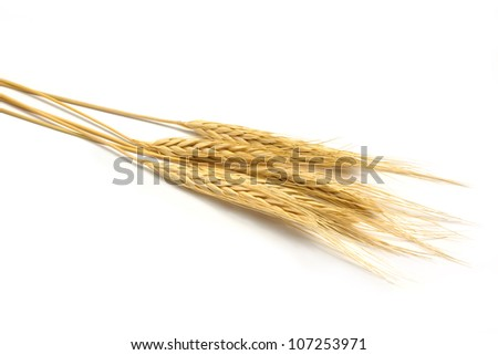 The group of golden barley on white background