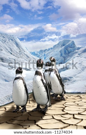 The group of penguins costs on dried end cracked ground and is very surprised