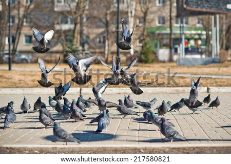 The group of pigeons arrived on a pavement for food.