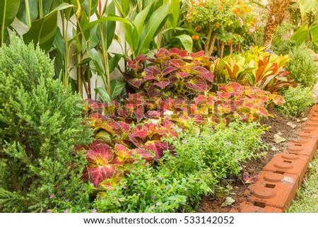 Shutterstock The Group of Plectranthus scutellarioides (Coleus) and Lantana Camara flower with sunlight - Garden decorative Concept