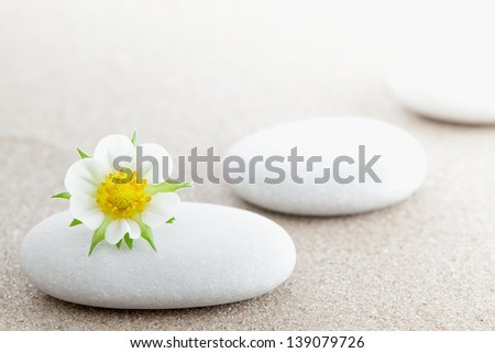 The group of stones with a flower lies on small sea sand