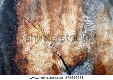 The growth rings of a tree