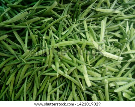 The guar or cluster bean, with the botanical name Cyamopsis tetragonoloba, is an annual legume and the source of guar gum. Foto stock ©