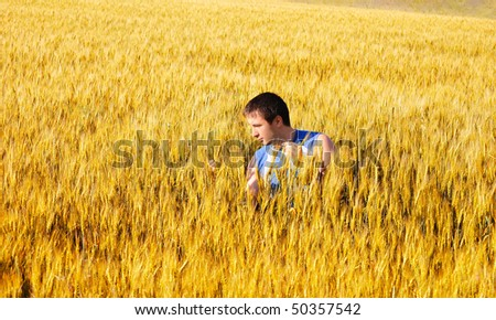 The guy examines wheat ears in an autumn field