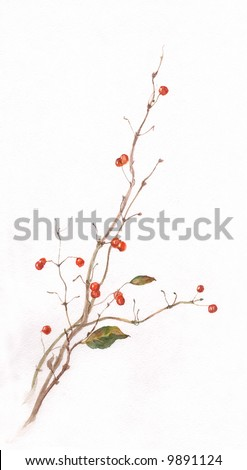 The hand drawn watercolor of honeysuckle branch with berries.