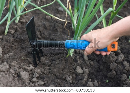 The hand holding the gardening tool