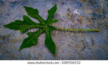 the hand leaf #1089506552