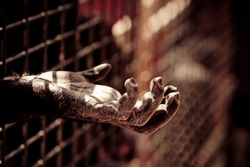 the hand of a chimpanzee into a zoo jail with dramatic treatment.