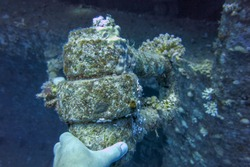 The hand of a diver holds the anchor of a sunken Salem Express wreck. Shipwreck wreck in the Red Sea, near the port of Safaga, Egypt. In 1991, during a night storm, Salem Expres crashed into a reef.