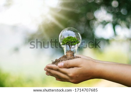 The hand of a young woman holding an energy-saving lamp, including a small tree growing in an energy-saving lamp and changing to renewable energy. Foto stock ©