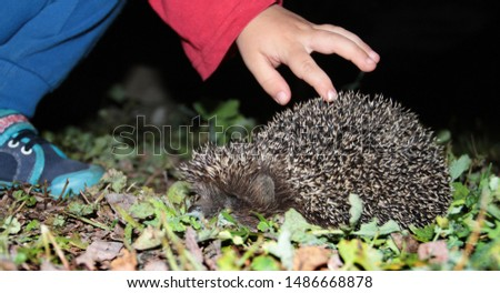 The hand of the baby touches the hedgehog by the needle