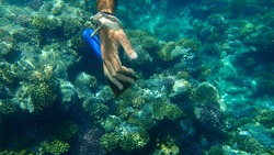 The hand of the criminal, who wanted to cut the coral with a sharp spatula undersea. Result: the photographer drove the man ashore in disgrace. Red Sea, Egypt, Sharm El Sheikh, Nabq Bay.