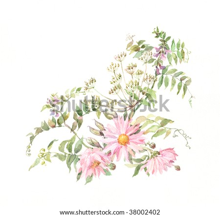 The hand painted watercolor of pink chrysanthemums with grass.