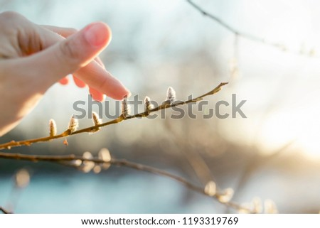 the hand touches a willow #1193319769