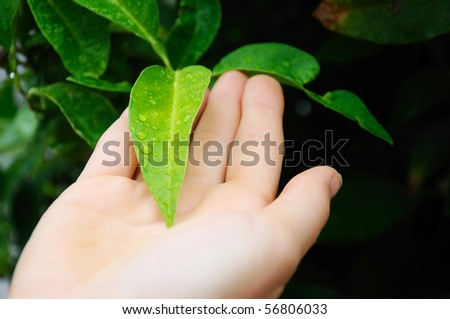 The hands of a young girl and leaves with drops of water on them