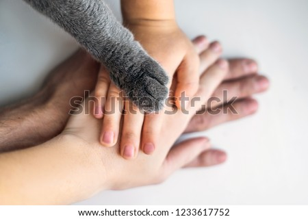 The hands of the family and the furry paw of the cat as a team. Fighting for animal rights, helping animals