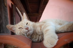 The handsome cat on the roof. Italian Cat, Beautiful yellow cat,Close up cat face,European kittens,Italy.