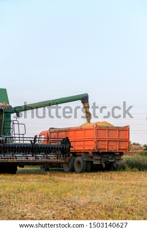 The harvest in the fields with harvester. Big harvester collects graine harvest on the field in autumn.