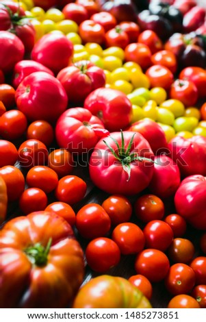 The harvest of vegetables. Different varieties of tomatoes  are laid out on a wooden background. Studio photography. Healthy and natural food.Vertical