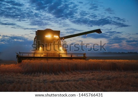 The harvester operates in the field in the evening. Wheat harvested at night #1445766431