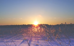 The hay is glowing gold during sunset. Image taken in Finland during winter. Some hay is glowing during the golden hour. Image has a vintage effect applied.