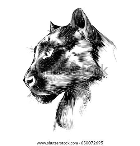 the head is black Panther's profile looking into the distance, graphics sketch black and white drawing