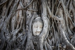 The head of a Buddha image in an old tree root at Wat Mahathat is the famous and famous landmark of Ayutthaya Province, Thailand.