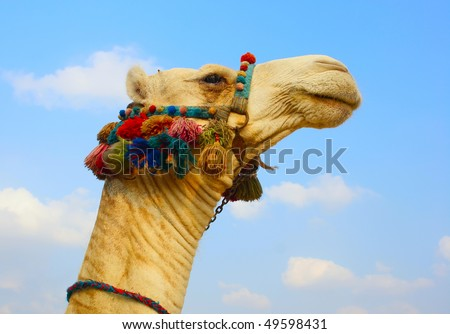 The head of a camel in the ethnic, color armband