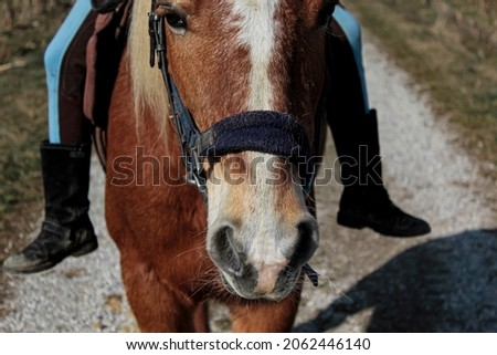 The head of a horse with a halter on.