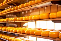 The head of cheese on the shelves. Zaanse-Schans. Netherlands