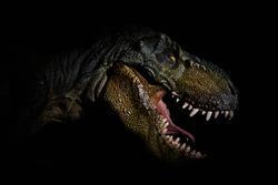 The head of dinosaur in the dark background