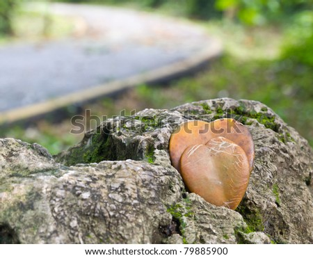 The heart shape of brown leaf on stone in deep forest