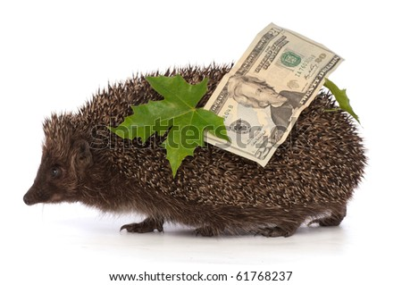 The hedgehog in motion hastens home from the bank carrying percent hundred dollars profit